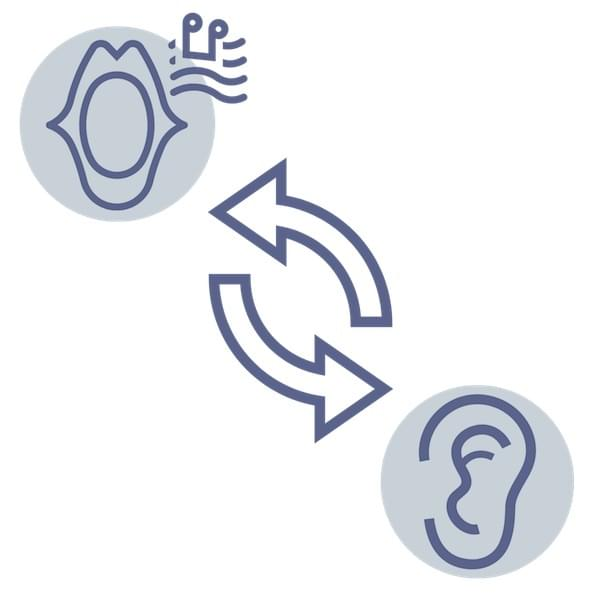 Ear Voice Feedback Loop